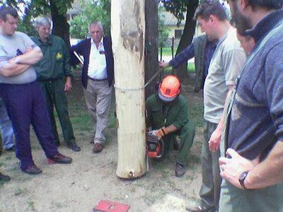 podsek stabla